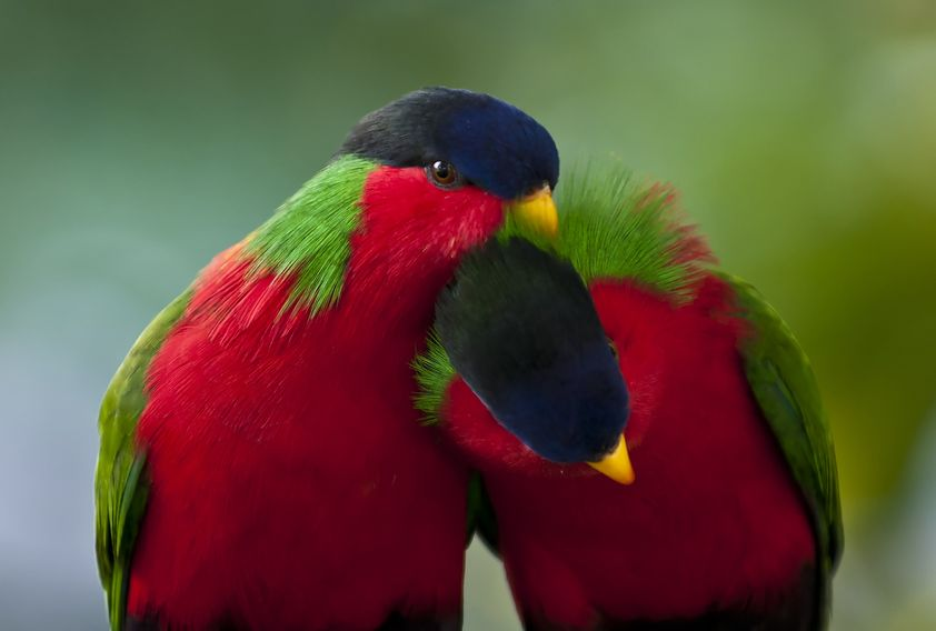 Natures Best Photo Essay - Birds in Love