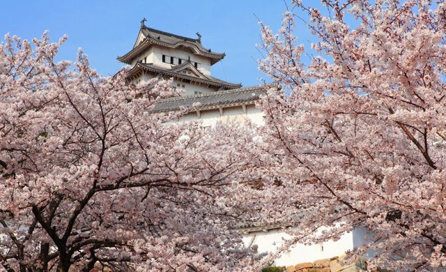 Travel Life List (Bucket List) Japan Cherry Blossom