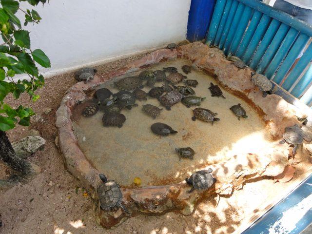 Isla Mujeres Cancun Mexico Turtle Farm