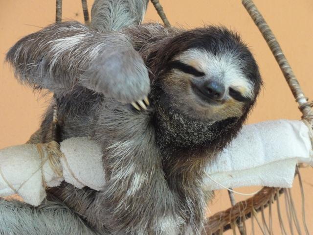 Sloth Photo Essay - Costa Rica