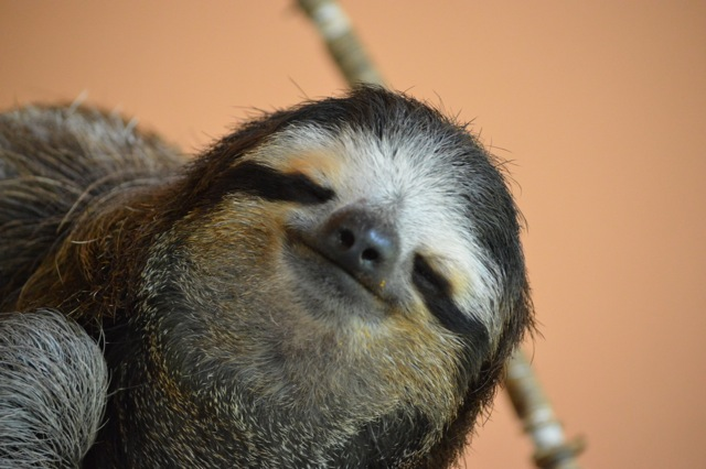 Costa Rica - Sloth Photo Essay