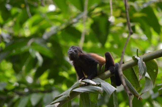 Costa Rica Monkey - Sloth Photo Essay