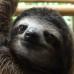 Warning! The cuteness might blow your mind… Sloth Photo Essay
