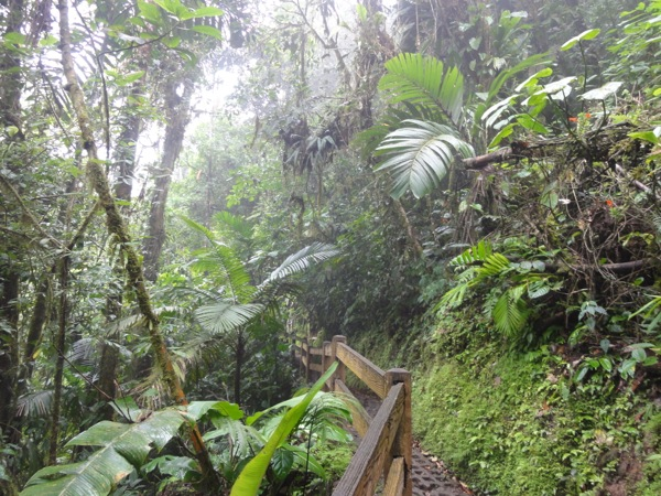 Costa Rica - Jungle Walk
