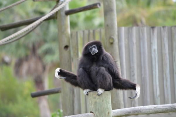 Wildlife From Around The World Photo Essay