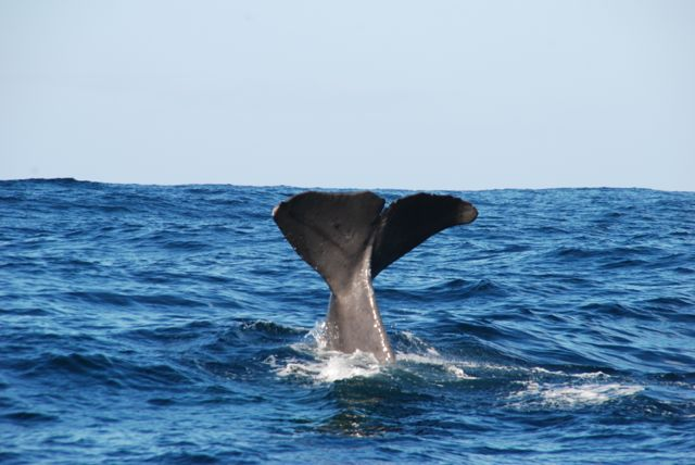Nature's Top 5 Attractions in New Zealand - Whale