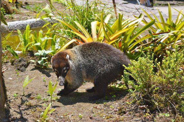 Costa Rica - Animal