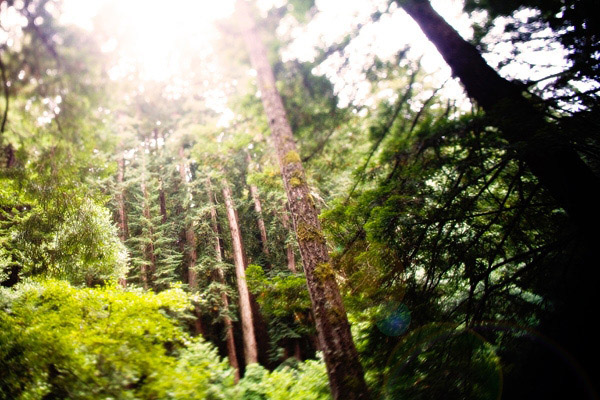 Natures Best Photo Essay - Muir Woods
