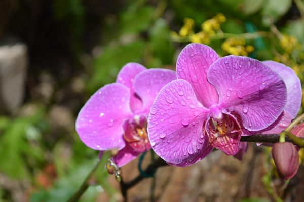 Flowers of the World Photo Essay - Orchid
