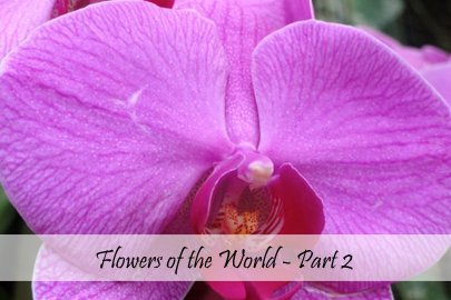 Flowers of the World - Part 2 Cover