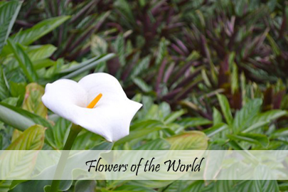 Flowers of the World Photo Essay Cover