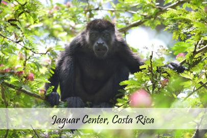 Jaguar Center Photo Essay Cover