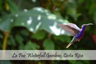 Laz Paz Waterfall Gardens Photo Essay Cover