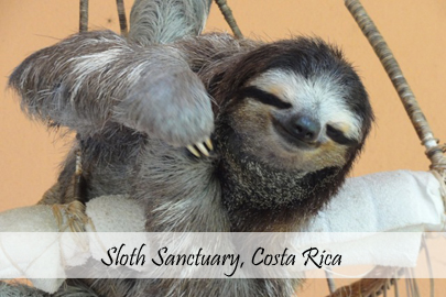 Sloth Sanctuary Photo Essay Cover