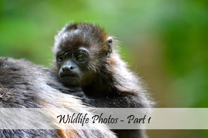 Wildlife Part 1 - Photo Essay Cover