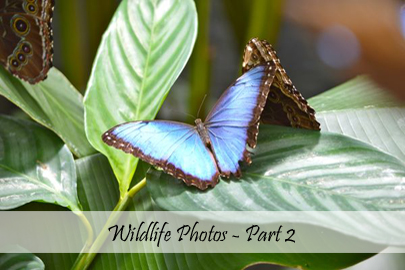 Wildlife Part 2 - Photo Essay Cover