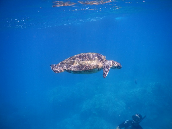 Travel Bloggers Tell All - Our Favorite Places -  A Passion and A Passport - Maui