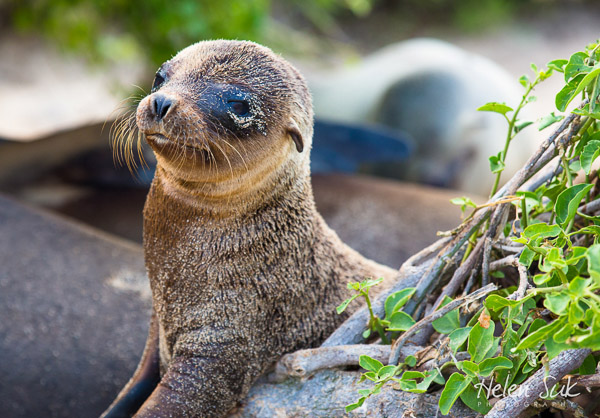Travel Bloggers Tell All - Our Favorite Places - Not without my passport - Galapagos Islands