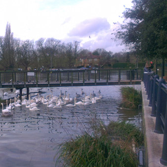 The Charisma of Kingston Upon Thames