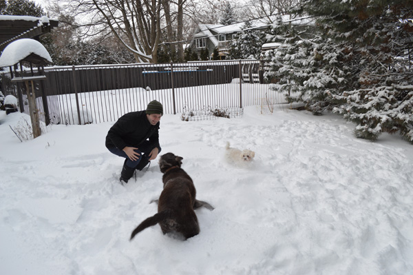 Housesitting in Canada during Winter!! Are we crazy!! - Dogs playing