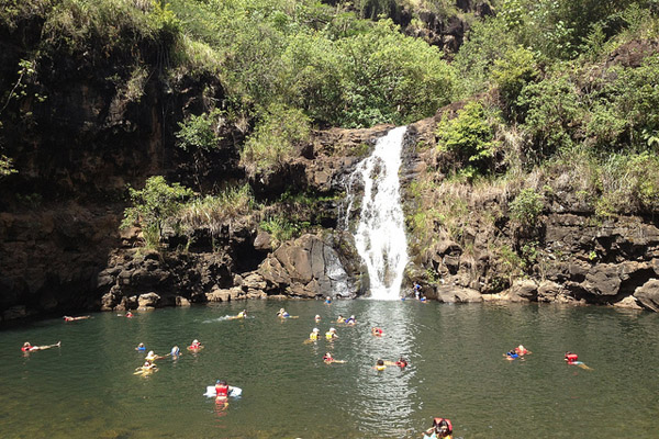 See Oahu in a Day with the Ultimate Circle Island Eco Adventure - Waimea Falls - temppu