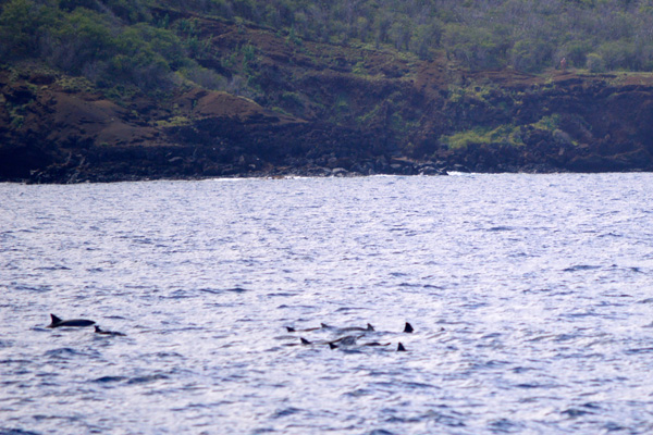 Snorkeling Molokini Crater and Turtle Town with Pride of Maui - Dolphins