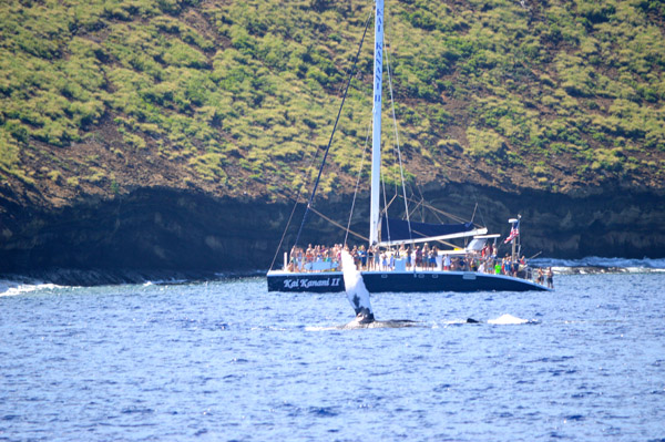 Snorkeling Molokini Crater and Turtle Town with Pride of Maui - Whale (2)