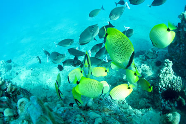 Snorkeling Molokini Crater and Turtle Town with Pride of Maui - fish