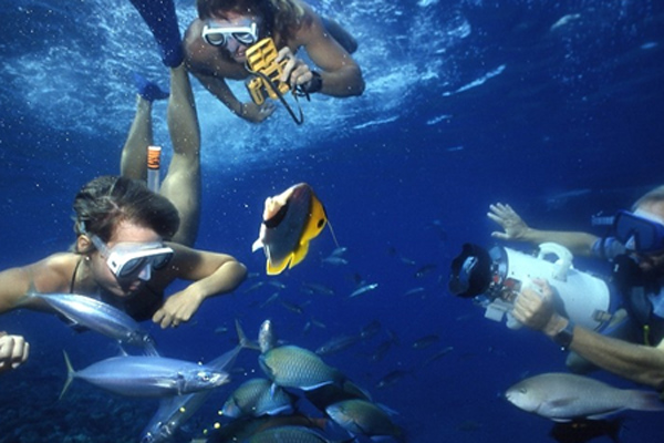 Snorkeling Molokini Crater and Turtle Town with Pride of Maui - snorkeling-molokini1