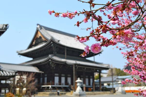 Japan Postcards - Our Journey through Tokyo and Kyoto - Kyoto - Temple and Cherry Blossoms