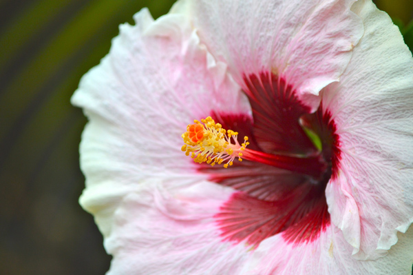 Postcards from Hawaii - Our Best from Oahu, Maui and Kauai - Kauai - Flower