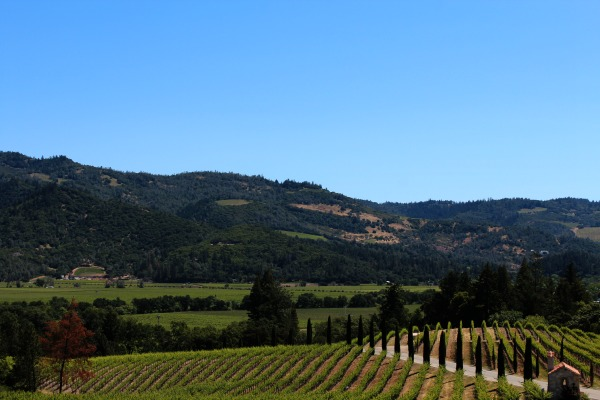 Three Days in California Wine Country - wine country