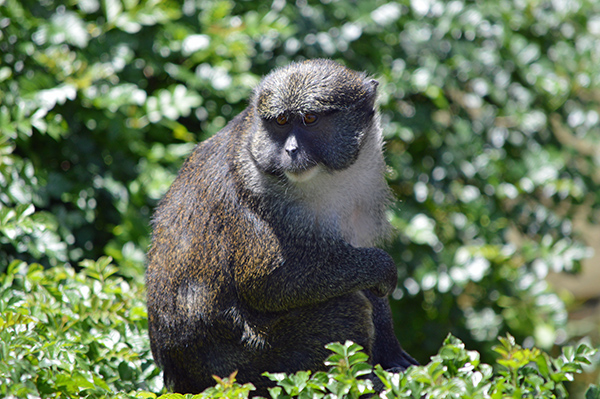 San Diego Zoo in Photos - Monkey