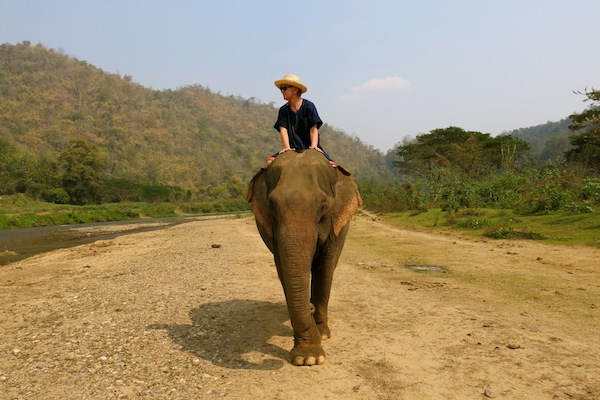 Interview with a Traveler @JustOneSuitcase - Elephant