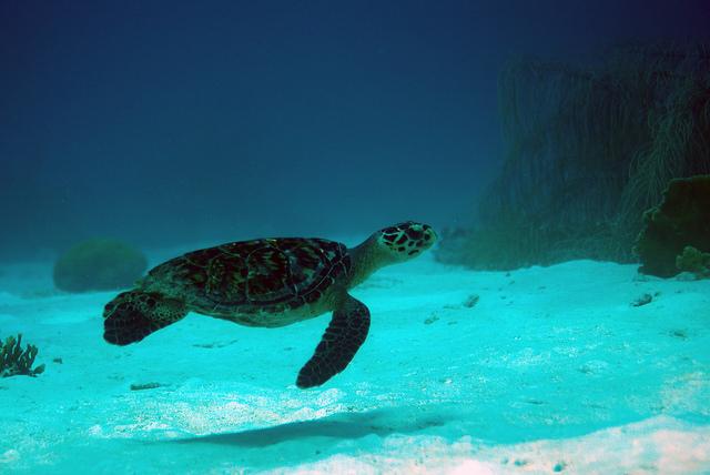 8 Warm Winter Escapes in the Caribbean - Bonaire