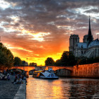 Sights to See: From Pedigree to Pedestrian in Paris