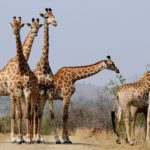 The Best Travel Experiences of South Africa