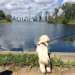 The Best (Almost) Free Thing To Do in Toronto – Toronto Island